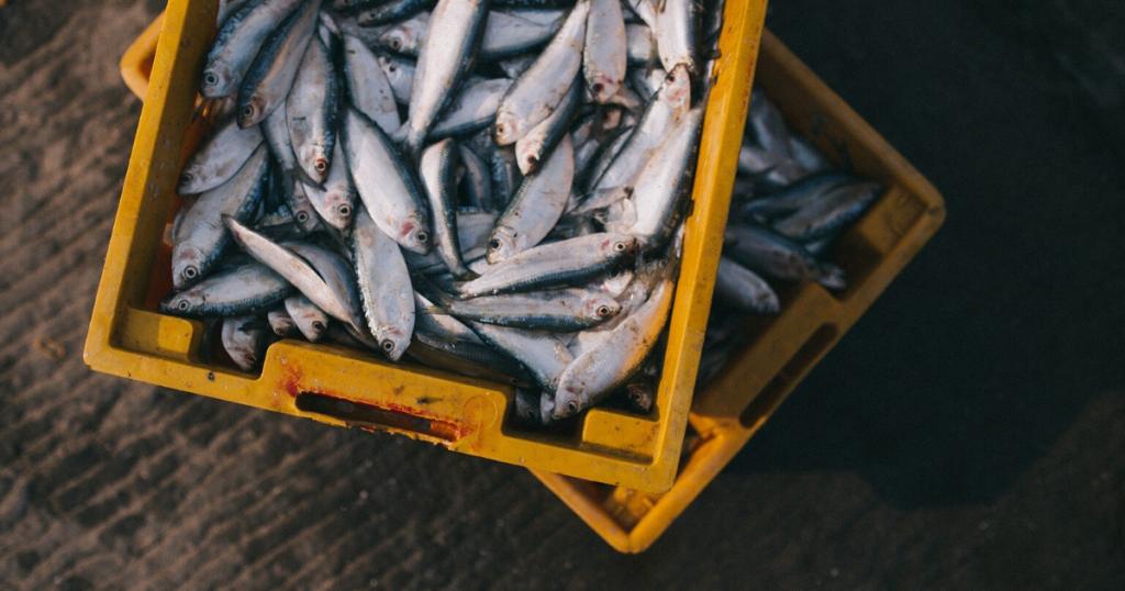 poisson de méditérannée